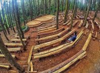 Hutan Pinus Imogiri Bantul