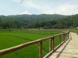Wisata Sawah Sukorame